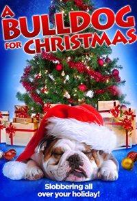 A Bulldog for Christmas