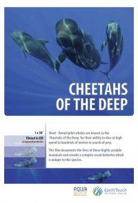 Cheetahs of the Deep
