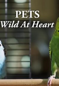 Pets: Wild at Heart